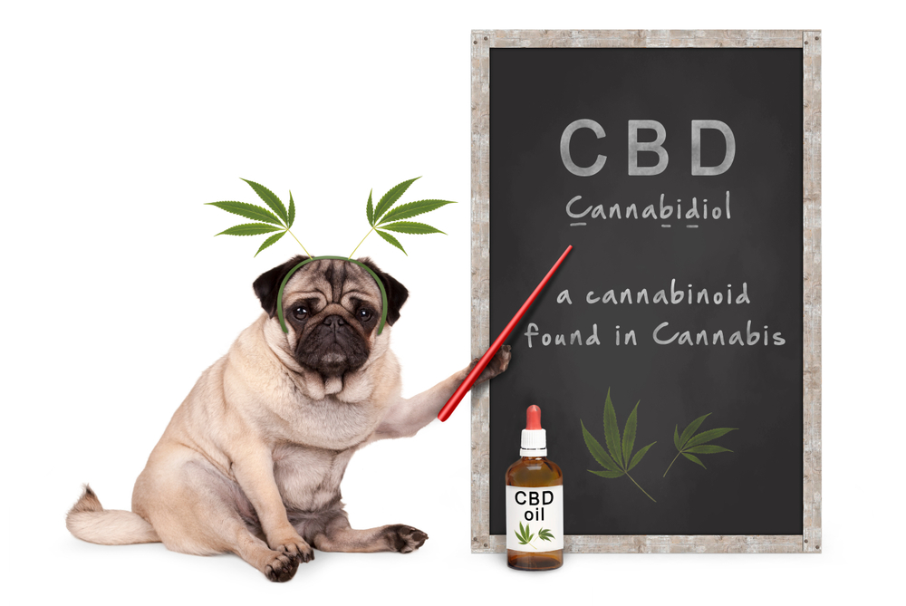 CBD Products for Pets by Hemp & Herbs | Temple Texas